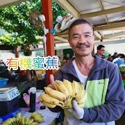 這就是極品蜜蕉,只要嘗過一次,讓你回味無窮