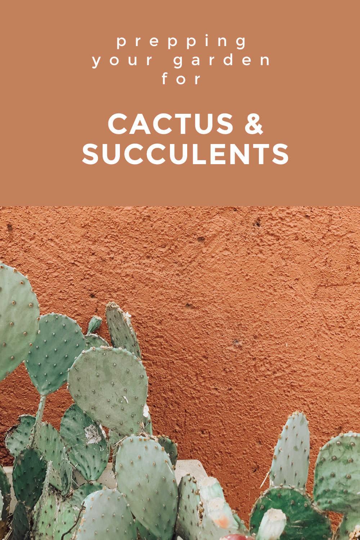 GARDEN CACTUS AND SUCCULENT
