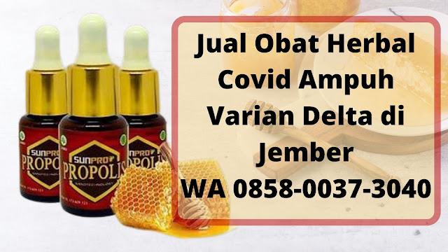 Jual Obat Herbal Covid Ampuh Varian Delta di Jember WA 0858-0037-3040