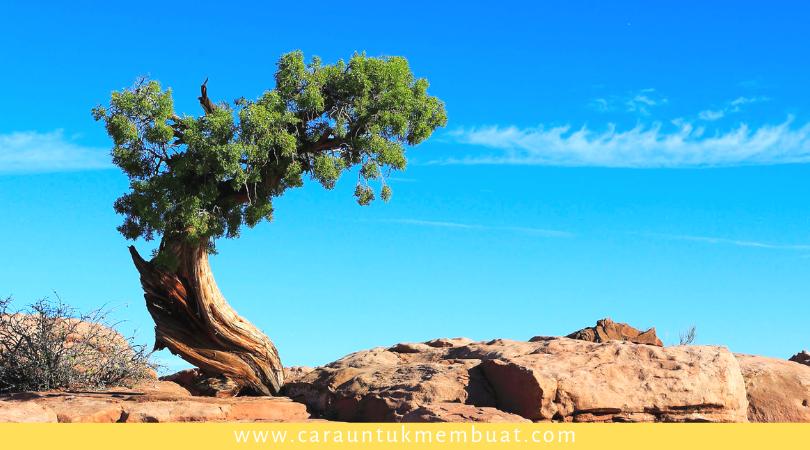Juniper Tree on Canyonlands 5