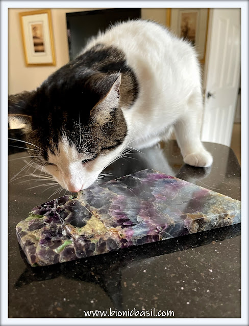 Mandalas on Monday ©BionicBasil® Colouring With Cats #119 Melvyn Checking Out The Fluorite