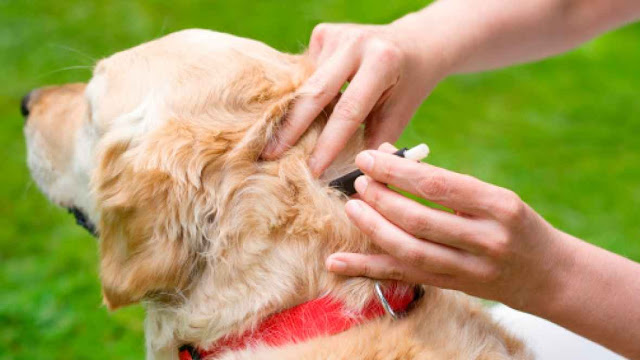 The best ways to protect your dog against Diabetes