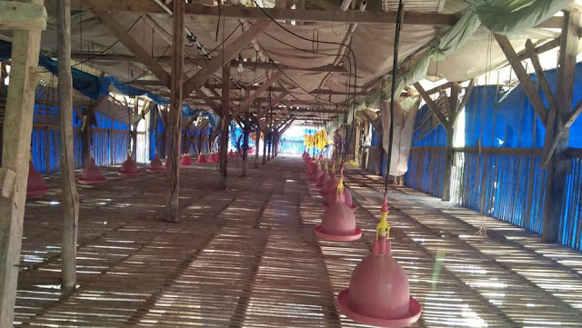 Kandang Bebek Peking  - liataja.com
