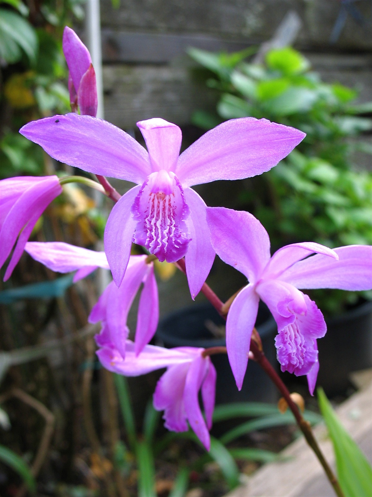 Image Gallery names of orchid flowers