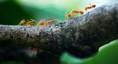 What affect do ants have on you?