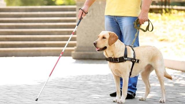 Felháborító: gombostűvel teletűzdelt szalonnadarabokat szórtak szét a vakok és gyengénlátók irodája előtt – Veszélyben a vakvezető kutyák