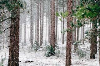 Congelamiento de piel y tejidos, lesiones en temporada invernal