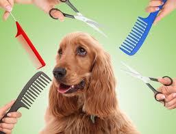 Cuidado esencial para tu perro