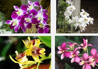 Arti MImpi Bunga Anggrek Pertanda Buruk
