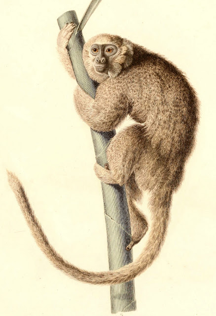 Extinction mystery solved? Evidence suggests humans played a role in monkey's demise in Jamaica
