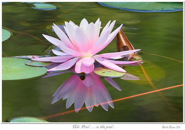 Echo Pond: ... on this pond...