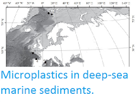 https://sciencythoughts.blogspot.com/2015/10/microplastics-in-deep-sea-marine.html