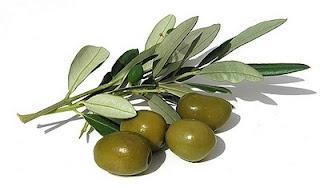 Extrato de oliveira no controle da hipertensão.