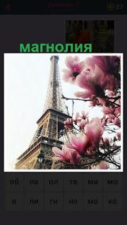 цветет магнолия на фоне эйфелевой башни