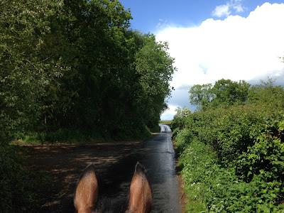 Paardenoortjes naar voren kijkend over een weg_Paardrijden Online