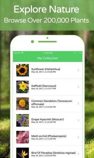 تطبيق للتعرف على النباتات والأشجار والزهور عبر التقاط صورة لها