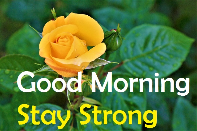 Good Morning Stay Strong yellow rose image