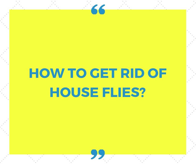 HOW TO GET RID OF HOUSE FLIES? - POSTER