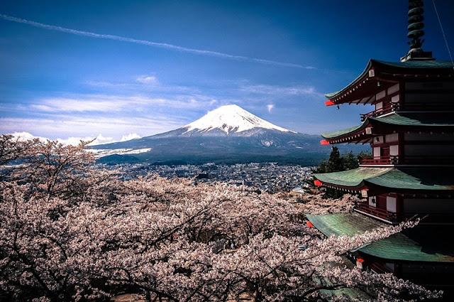 Chùm ảnh đẹp Hoa Anh Đào Nhật Bản vào tháng 02/2020 14