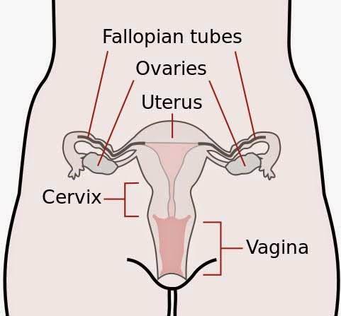 Kerusakan pada tuba fallopi dapat menyebabkan kehamilan eksotik terganggu