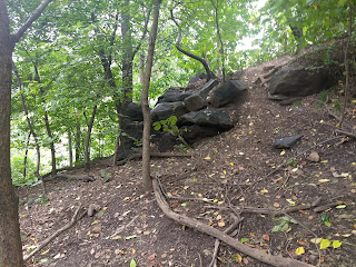 Central park, fallen down tree and surrounding trees