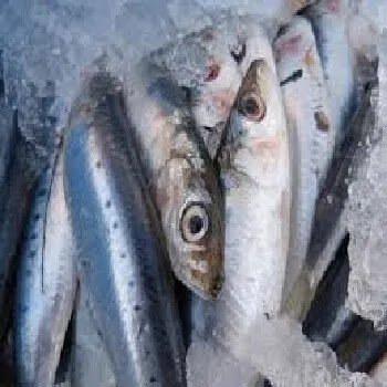 दवाक, भिंग, माथी मासा, Herring fish name in Marathi