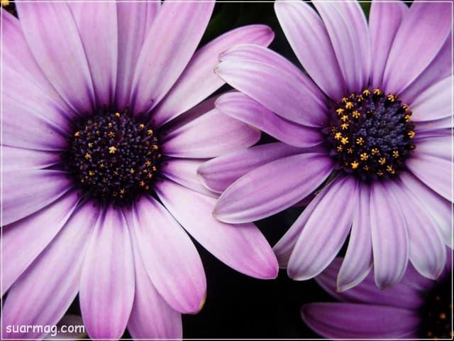 صور ورد 2 | Flowers Photos 2