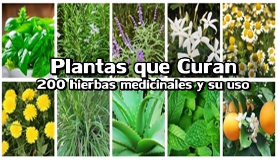 hierba medicinal para la impotencia masculina