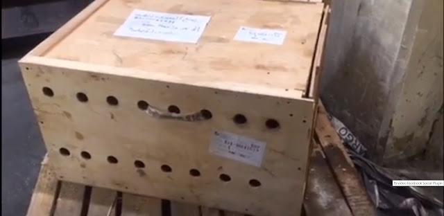Животные просидели в этой коробке 7 дней, пока в щель не заглянул работник аэропорта!