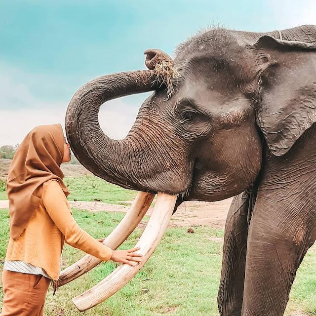 Tempat Wisata Waykambas Lampung