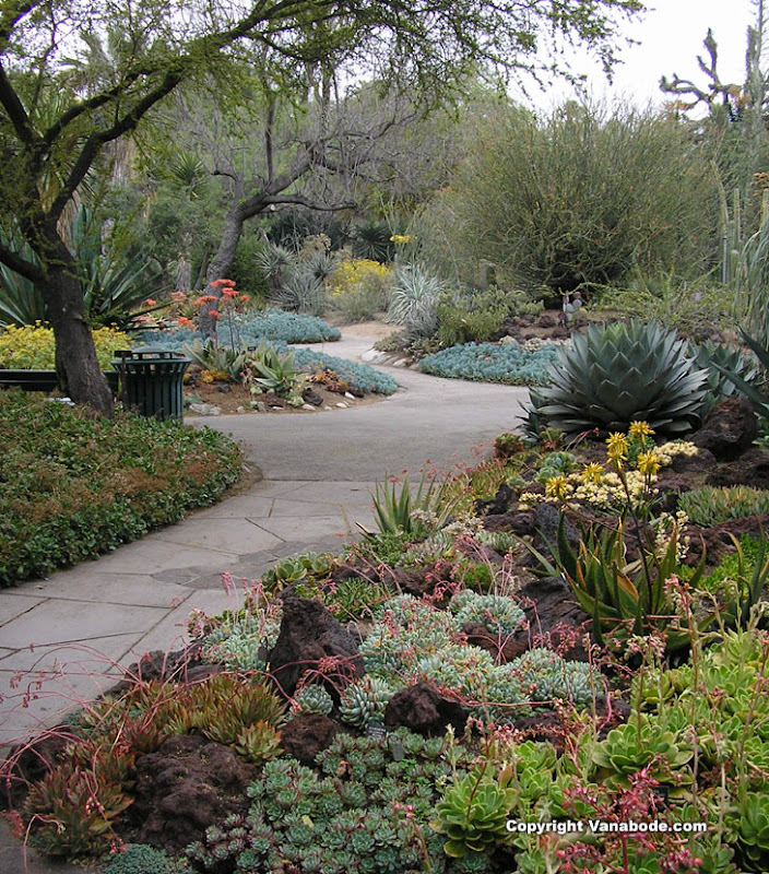 TOP WORLD TRAVEL DESTINATIONS: Huntington Library Cactus