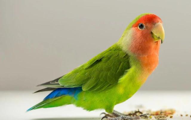 Bahan Kimia Yang Sangat Berbahaya Untuk Burung
