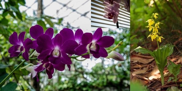 Orchids Basic Care and  maintenance