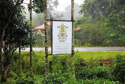 Coffee producers Bolaven Plateau