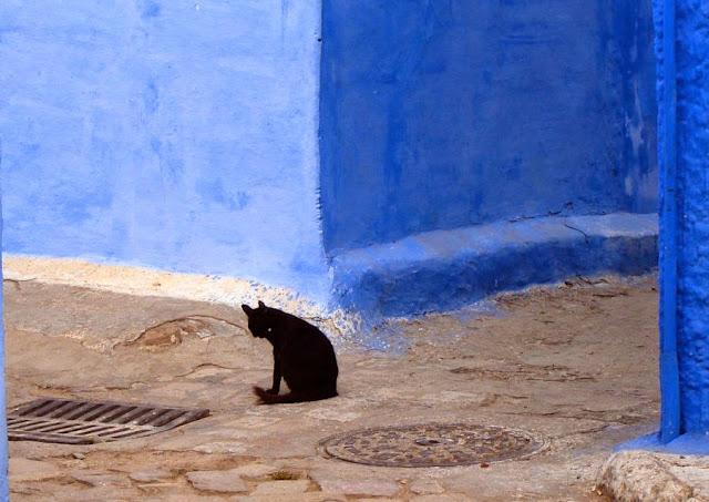 Czarne koty w Maroko. Rabat