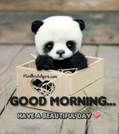 Good Morning Images With Panda