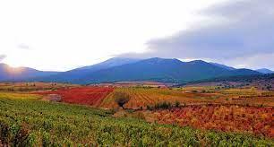 Google image of Carinena Spain