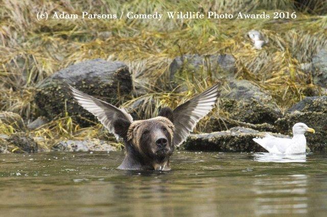 beruang berendam