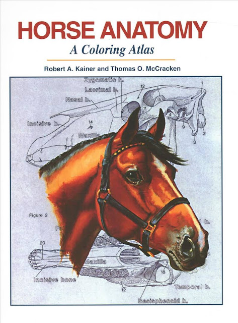 Horse Anatomy  A Coloring Atlas - WWW.VETBOOKSTORE.COM
