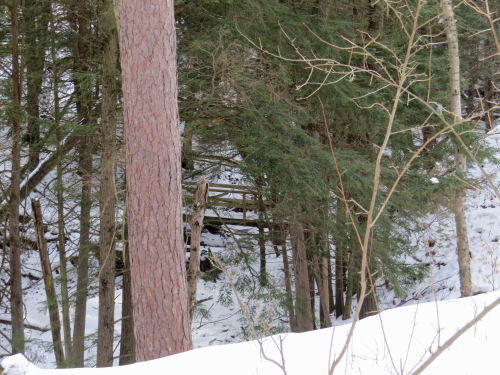 trail bridge through trees