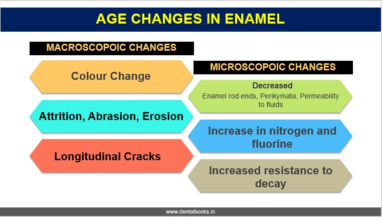 AGE CHANGES IN ENAMEL Dentomedia