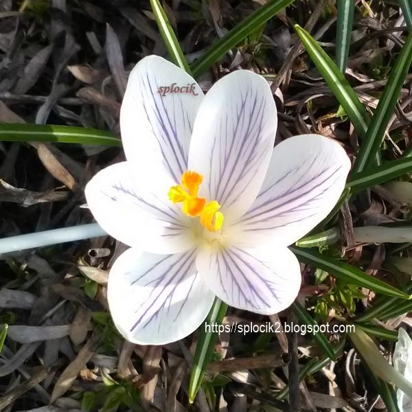 Pozdrawiam wiosennie