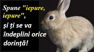 """Iepure, iepure"": O superstiție despre noroc"
