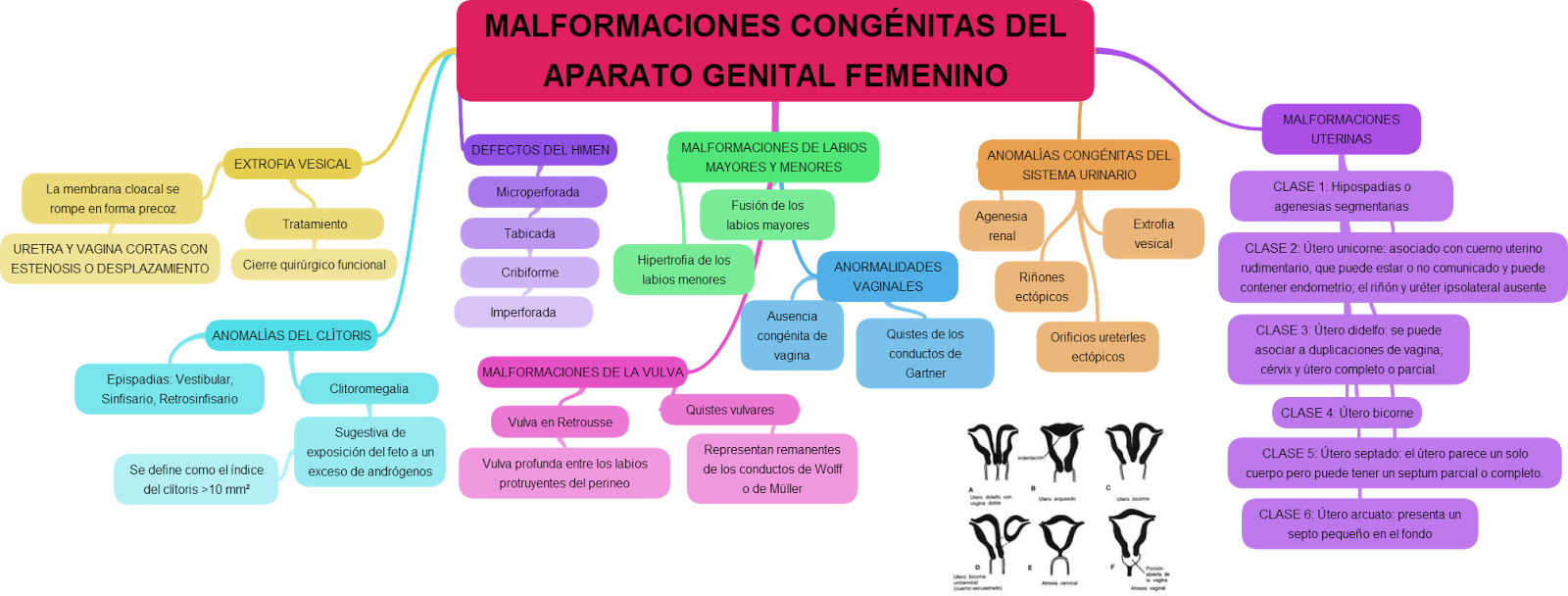 agenesia congenita uterina