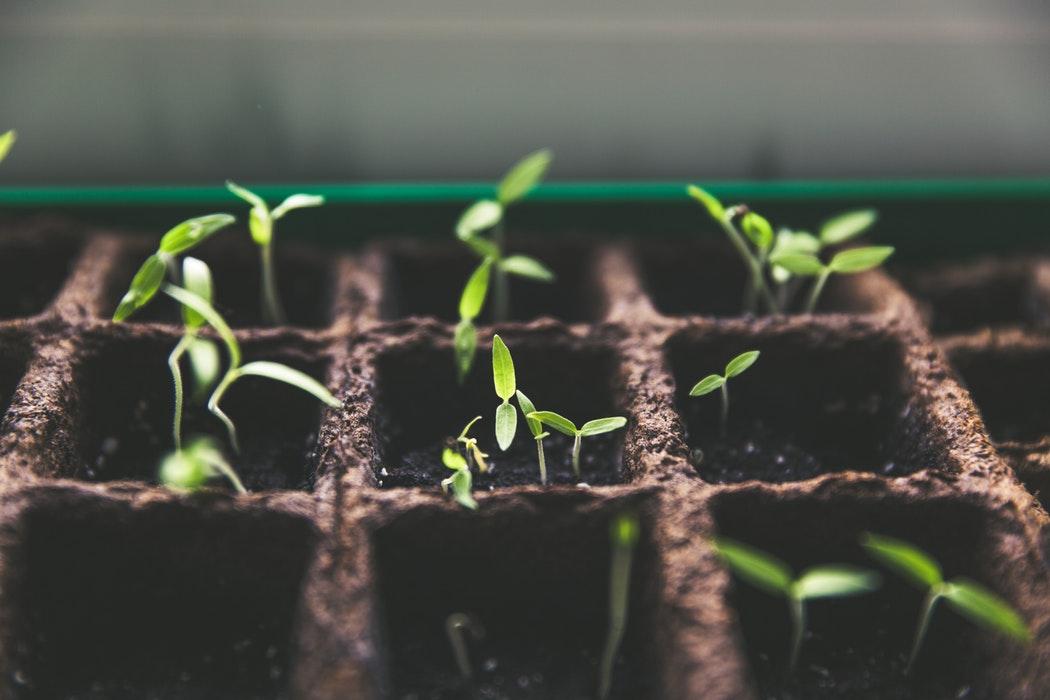 Uprawa roślin zimą