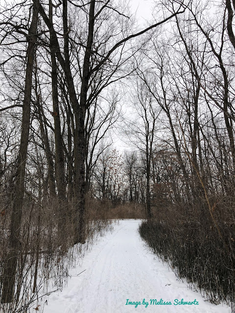 Trees frame a snow trail forward at The Hollows Conservation Area.