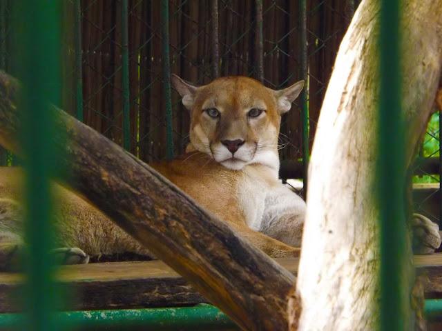 managua zoo nicaragua