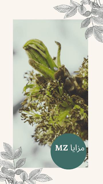 أعشاب التخسيس
