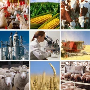 Agri Business Consultancy