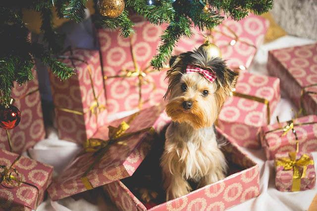 Είναι ΟΚ -δεν είναι ΟΚ για τα Χριστούγεννα και την Πρωτοχρονιά
